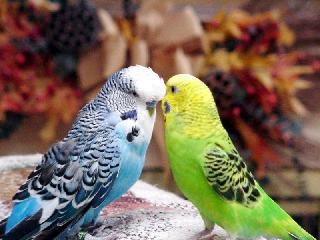Если Вы решили дать имя попугаю.