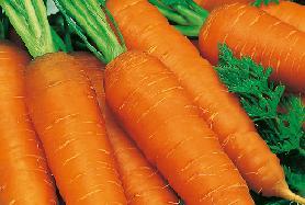 Морковь с грядки.