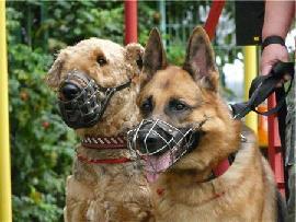 Собаки в наморднике.