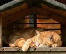 Кошка в домике