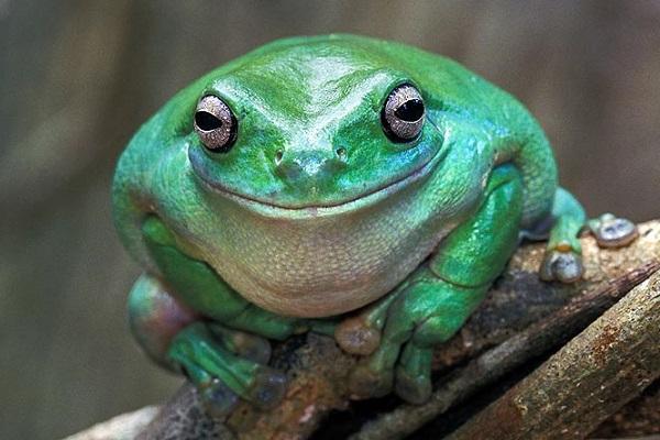 Даже лягушки улыбаются, когда настроение позволяет