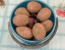 Сохраняем картофель