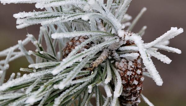 Снег для поделок