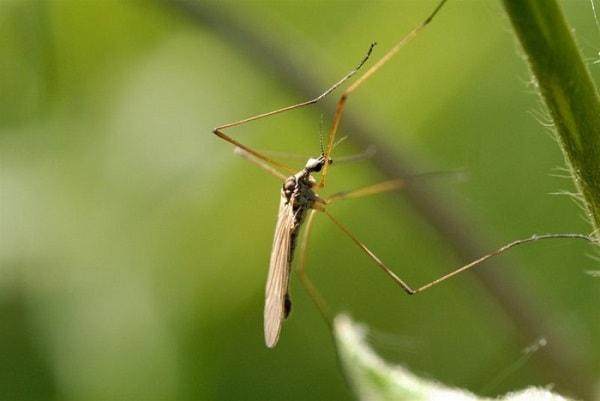 Защищаемся от комаров