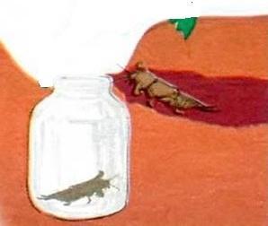 Ловушка для медведки из стеклянной банки
