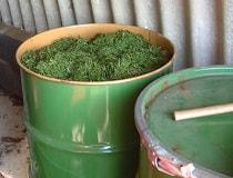 Как сделать зелёное удобрение?
