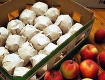 Как сохранить яблоки на зиму