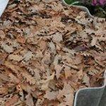 kompost_iz_listjev