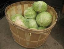 Как хранить капусту зимой в погребе и в домашних условиях?