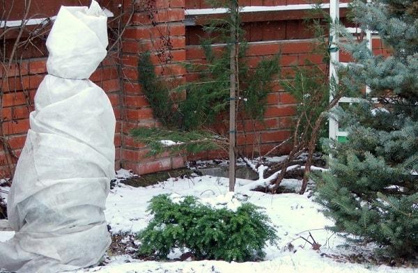 Готовим участок к зиме