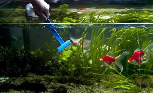 Чистим домашний аквариум
