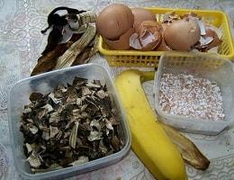 Удобрение из банановой кожуры для комнатных растений.