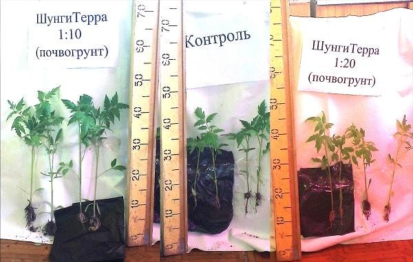Контроль развития рассады с разным соотношением почвогрунта