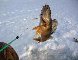 Зимняя рыбалка в глухозимье на окуня