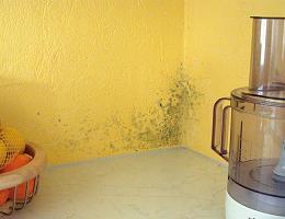 Плесень на обоях или на стенах в квартире