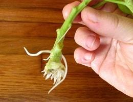 Стимуляторы роста растений в домашних условиях