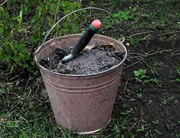 Подкормка золой рассады и растений или древесная зола как удобрение