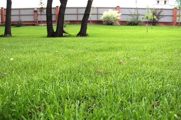 Зелёный газон