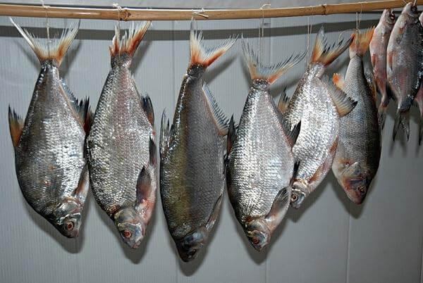Вялим рыбу без мух