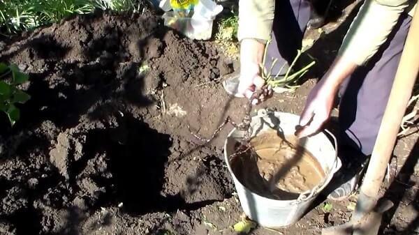 Обрабатываем корни перед посадкой