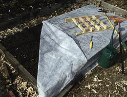 Как подготовить грядку под чеснок осенью для посадки под зиму? Делаем это правильно