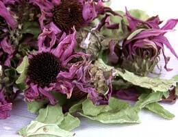 Сушёные цветы и листья эхинацеи
