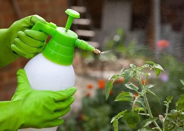 Чем обработать растения от вредителей?