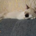 Как отучить кошку царапать мебель?