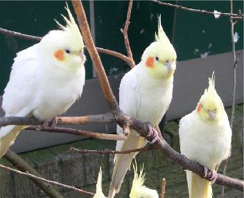 Купить попугая