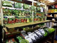 Покупайте семена только у надёжных производителей!