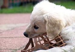 Намордник для маленькой собачки.