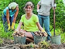 Как хранить картофель и морковь?