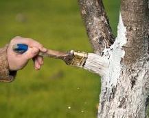 Обрабатываем деревья осенью.