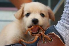 Собака грызёт обувь хозяина.