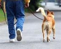 Выгул собаки