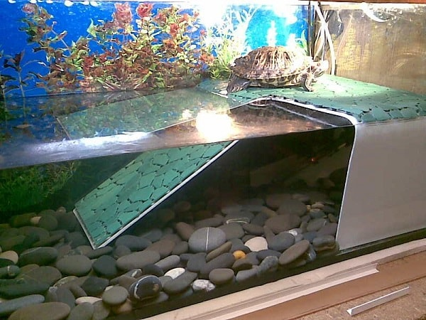 Аквариум для содержания красноухой черепахи