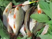 Сохраняем улов