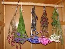 Сушим букеты цветов
