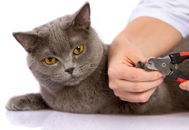 Стрижём кошке когти