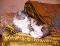 Как вывести запах кошачьей мочи с дивана?
