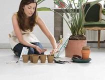 Удобрения для комнатных растений в домашних условиях