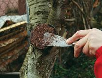 Как сделать садовый вар своими руками в домашних условиях?