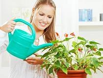 Как ухаживать за цветами в домашних условиях?