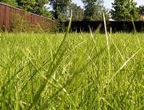 Как посеять газонную траву весной своими руками?