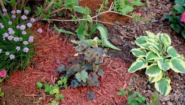 Мульчирование почвы под цветами