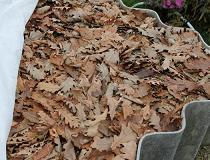 Как сделать перегной из листьев или листовой компост?
