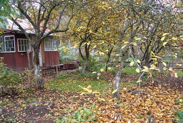 Опавшие листья на даче