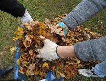 Что делать с опавшими листьями на даче осенью?