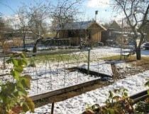 Посев томатов под зиму в открытый грунт