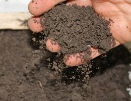 Подготовка почвы для рассады томатов, перца, огурцов и прочих овощей